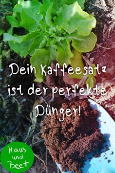 Coffee grounds as fertilizer - don't throw it away! - House and bed Coffee grounds as fertilizer. Instead of composting your coffee grounds or even throwing them into the residual waste, y. Garden Beds, Garden Paths, Garden Landscaping, Hydroponic Gardening, Hydroponics, Coffee Grounds As Fertilizer, Hair Rainbow, Letterbox Flowers, Plant Fungus
