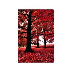 Red Fall Leaves ❤ liked on Polyvore featuring backgrounds, pictures, photos, autumn and red