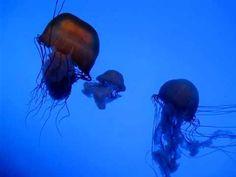 Georgia Aquarium,  jellyfishes, largest aquarium, Atlanta, Georgia, United States, North America - http://skintagsnomore.info/georgia-aquarium-jellyfishes-largest-aquarium-atlanta-georgia-united-states-north-america/ #SkinTags #SkinCare