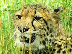 Addo to Karoo - Magnificent Mountain Zebra National Park - Getaway Magazine