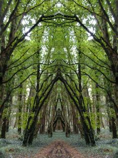 Belleek Castle Woods, Ireland