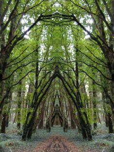 Belleek Castle Woods, Ireland                                                                                                                                                      More