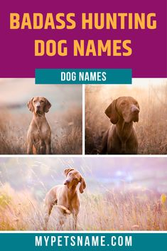Badass names like 'Bane' would make every hunting trip more exciting, as it would become an adventure. Take a look a at our list of badass hunting dog names that are hard-core, intimidating and ruthless. Girl Hunting Quotes, Hunting Dog Names, Girl Dog Names, Hunting Girls, Puppy Names, Pet Names, Hunting Gear, Deer Hunting, Yellow Lab Names