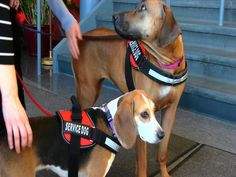 A Day in the Life: Calais School Service Dogs