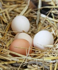 loved gathering eggs on the farm!