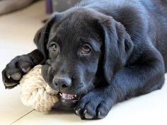How to Cure Your Dog of Dog Training Behavior Problems - Dog Training For the Difficult Dog Puppy Teething, Teething Toys, Cool Dog Houses, Best Puppies, Best Dog Training, Best Dog Breeds, Dog Behavior, Dog Toys, Pet Dogs