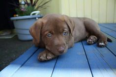 https://www.facebook.com/i.love.dogs.in/photos/a.291117396654.146122.41288731654/10152949258396655/?type=1