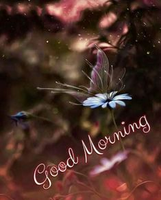 Good Morning Images Download Hd Good Morning Wishes Gif, Rainy Good Morning, Good Morning Beautiful Pictures, Good Morning Happy Saturday, Good Morning Beautiful Images, Good Morning Image Quotes, Good Night Love Images, Morning Quotes Images, Good Morning Cards