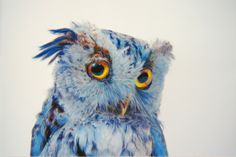 Pencil, pastel, and charcoal portraits of owls