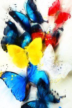 Wallpaper mariposa