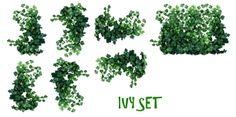 Plantas de hiedra REALES PNG porción mysticmorning