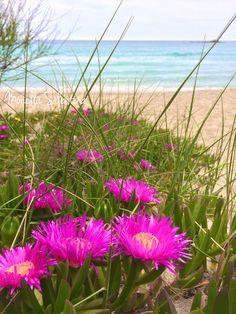 Fiori fuxia che crescono spontaneamente in spiaggia