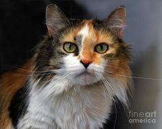 Výsledek obrázku pro cat hair styles