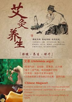 How is King of Herbs Mugwort used in TCM and moxibustion therapy? How is it useful to women's health? #moxibustion #tcm #moxibustionsingapore