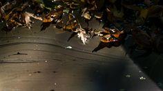 Herbstlaub im Sternenstaub  autumn leaves in stardust  № 1