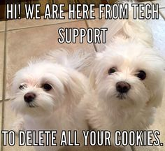 The best kind of tech support-they always come running for cookies :)