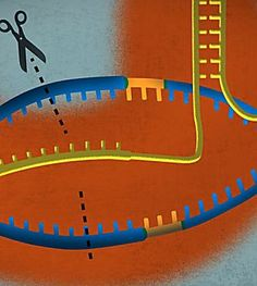 A simple guide to CRISPR, one of the biggest science stories of 2016