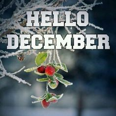 Hello December ☃ : QUOTATION – Image : Quotes Of the day – Description Hello December Sharing is Power – Don't forget to share this quote ! Hello December Tumblr, Hello December Pictures, Happy December Images, Hallo November, Welcome December, December Baby, Happy New Month December, December 2014, Christmas And New Year