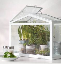 put herbs in the greenhouse we saw at home goods! IKEA Catalog 2015