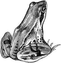 how to draw a frog follow along here in simple steps