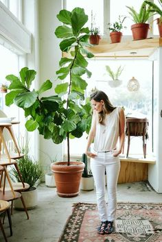 La planta perfecta para decorar: ficus lyrata (o pandurata) · The perfect indoor plant: the fiddle leaf fig tree Ficus Lyrata, Plantas Indoor, Decoration Plante, Plant Care, Indoor Plants, Hanging Plants, Big Plants, Indoor Gardening, Green Plants