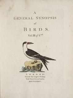 ≗ Feathered Nest of Hope ≗ bird feather & nest art jewelry & decor - antique print