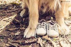 Resultado de imagem para ensaio gestante com cachorro