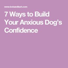 7 Ways to Build Your Anxious Dog's Confidence