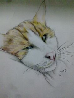 """my arabian cat """" CHINO """""""
