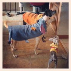 Check out my entry in Milk Bone's Halloween Pet Costume Contest. #HalloWOOF  Winnie the Pooh characters....