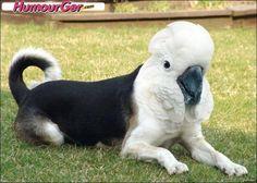 Photo montage animalière drôle : une tête de perroquet blanc sur le corps d'un chien