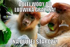 Ale jak to tak temu złodziejowi? Very Funny Memes, Wtf Funny, Polish Memes, Smile Everyday, Snoop Dogg, Best Memes, Fnaf, Best Funny Pictures, Ale