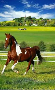 Share your photos and enjoy! Types Of Horses, Horses And Dogs, Cute Horses, Pretty Horses, Horse Love, Wild Horses, Animals And Pets, Cute Animals, Beautiful Horse Pictures