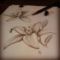 #lirio #flower
