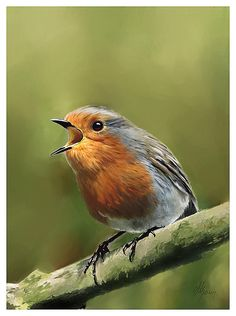 Sing Red Robin Sing Painting