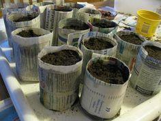 Yrttien ja kukkien taimille istutusruukut sanomalehdestä