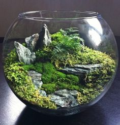 Terrarium gardening is a pleasant way for a frustrated gardener to still have landscape to care for in the dead of winter. You can create your own terrarium gardening. Terrarium Plants, Succulent Terrarium, Succulents Garden, Garden Plants, Indoor Plants, Planting Flowers, Fairy Terrarium, Terrarium Wedding, Balcony Garden
