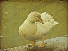 Pato.....Fotografía sobre textura..... #duck  #texture #nature #naturephotography #nature_perfection #nature_brilliance #naturebeauty #retratosdanatureza #ig_captures #igbest_shotz #global_hotshotz #global_nature #show_us_nature #princely_shotz #splendid_shotz #nature_shooters #naturegram #natureart #textureporn #udc #concepcion #universidaddeconcepcion #instanature #instafollow #artofinstagram #textura #textureporn #textureart by gabitagutierrezvigouroux