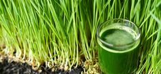 5 Best Benefits and Uses Of Wheatgrass Juice For Skin, Hair and Health