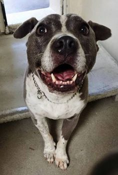 06/21/15-Adorable DEXTER is 7 and he spent his life in a family with kids and other dogs. He is already neutered, housetrained and will sit if you ask him to. He is really perfect but the shelter is full and he doesn't have much time. please SHARE, a FOSTER or Adopter would save his life. Thanks! #A4836093 My name is Dexter https://www.facebook.com/171850219654287/photos/pb.171850219654287.-2207520000.1433184755./430793563759950/?type=3&theater