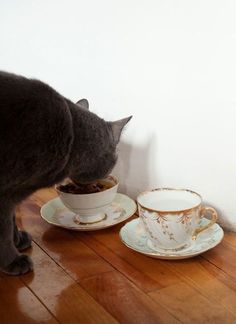 Cat Food Station Using non-pet food dishes for pet food is a super simple way to spice things up, and the plates will catch any spillage! - Whether you have a cat or dog, these great ideas can help minimize the mess of food bowls! Crazy Cat Lady, Crazy Cats, Diy Pet, Food Dog, Teacup Cats, Pet Bowls, Cat Food Bowls, Deco Design, Food Design