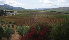 Cuatro vinos mexicanos premiados en competencia internacional