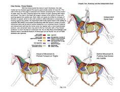 horseback riding leg position - Google Search