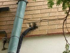 Bee removal in Johannesburg , removed bees at SANDTON POLICE STATION