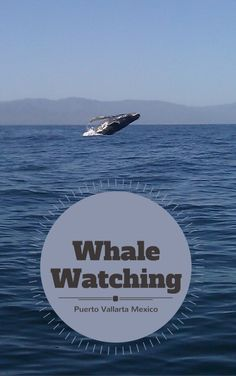 Humpback Whale Watching in Puerto Vallarta Mexico.