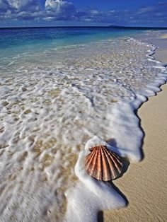 Scallop Shell in the Surf Stretched Canvas Print by Martin Harvey at Art.com