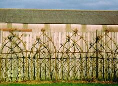 Buy Living Willow Fedge Screen • Willow Suppliers