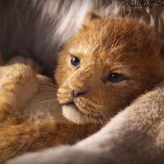 Lion King Remake, Lion King Movie, Simba Disney, Disney Lion King, Baby Animals, Funny Animals, Cute Animals, Disney Pictures, Cute Pictures