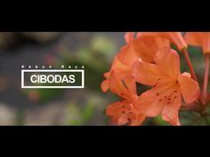 [companyprofile] kebun raya Cibodas 2015