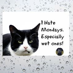 """As the song goes, """"rainy days and Mondays always get me down...."""""""